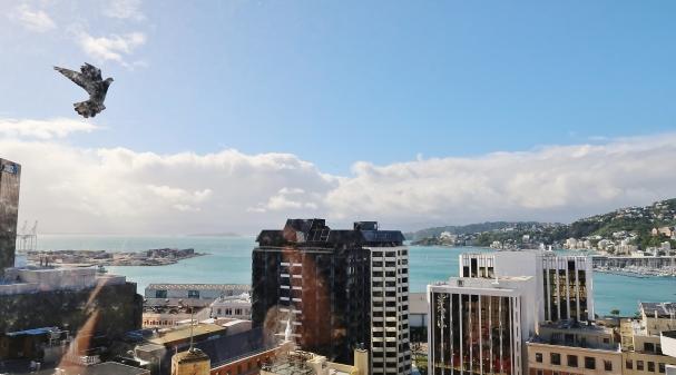 Wellington (13)